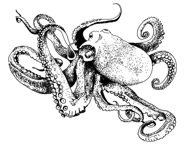 62 best Octopus images on Pinterest Octopus tattoos Octopus