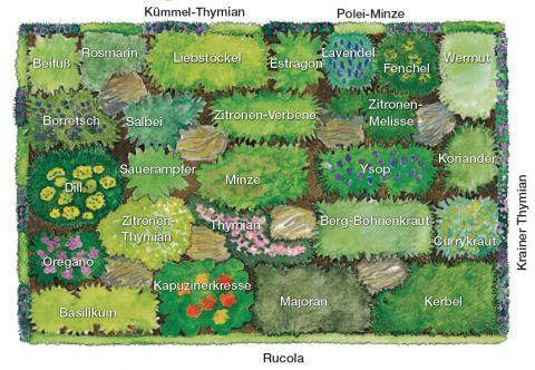 Pflanzplan Kräuterbeet