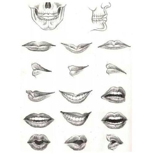 Imagem de anatomie bouche and dessin bouches en 2019 - Bouche en dessin ...