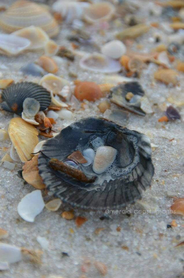 You'll find some of the best sea shells on Johnson Beach in Perdido Key (photo by Emerald Coast Images)