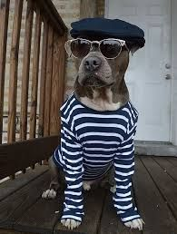 Image result for Dogs in clothes