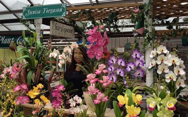 The National Capital Orchid Society 66th Fall Show and Sale at Behnke Nurseries