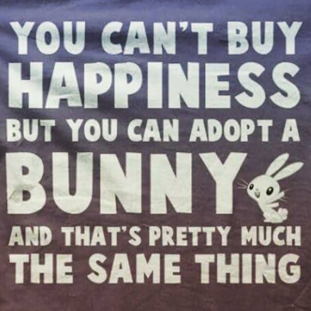 You can't buy happiness, but you can adopt a bunny, and that's pretty much the same thing