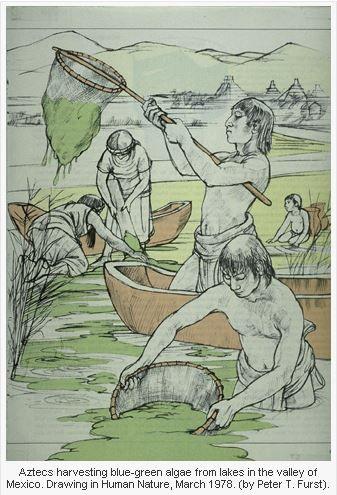 Spirulina harvesting at lake Texcoco circa 1492