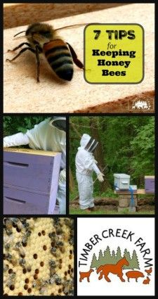 When adding bees, first take the time to learn how to start a honey bee farm because it deserves some unique considerations. Just as when adding any animal to the farm, being prepared before the bees come home, will help you be successful.