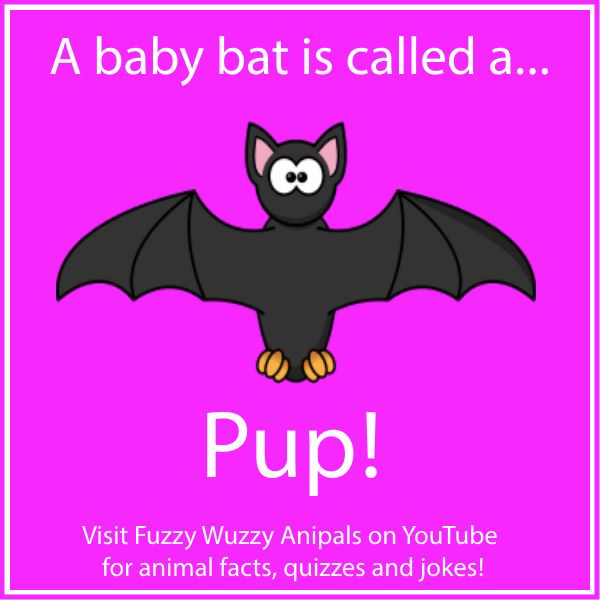 facts about bats Here are 31 interesting bat facts 1-5 bat facts image credit: enwikipediaorg 1 vampire bats will die if they can't find blood for two nights in a row luckily, generous well-fed bats will often regurgitate blood to share with others, in exchange for grooming.