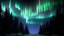 Aurora Borealis Forest Sky