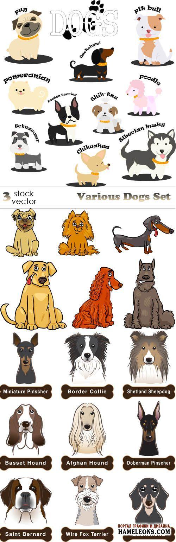 Собаки разных пород в векторе | Dogs vector