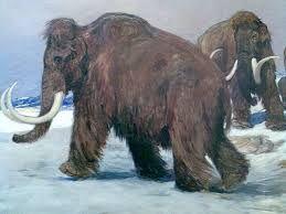 mammut - Sök på Google