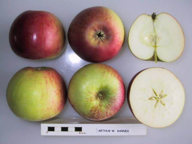 Arthur W Barnes Apple Apple Tree Care Fruit Apple