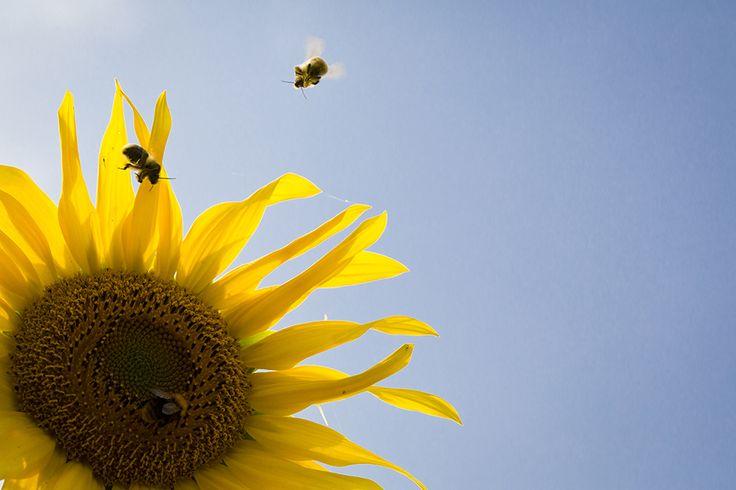 Wat kun je zelf doen voor de bijen? https://dekleurvangeld.nl/toekomst-voor-de-bij/