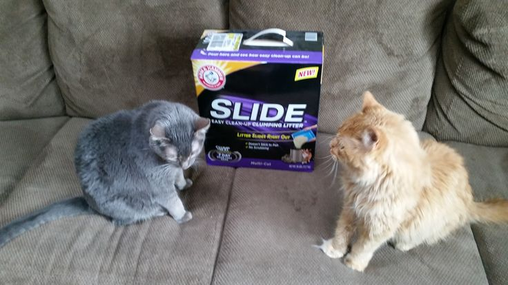 #ad The ARM & HAMMER™ Slide™ Clumping Litter was great! It is easy to scoop. It clumps better than the litter we normally use and the clumps don't really stick to the sides of the litter box. They do tend to still stick to the corners, but the clumps come off a LOT easier than our other litter. The scent was a good strength and it was effective at being odor free, which was great! I received a free product for the purpose of my review. Opinions are 100% my own.  #FreeSample