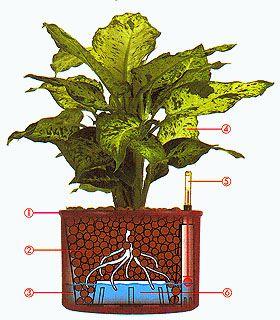 Hydroponické pěstování http://www.semena-marihuany.cz/cs/articles/18-hydroponie
