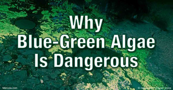 Toxic algae blooms are taking over areas of Florida's coastline and seriously endangering the health of residents and marine life. http://articles.mercola.com/sites/articles/archive/2016/07/19/toxic-blue-green-algae-blooms.aspx