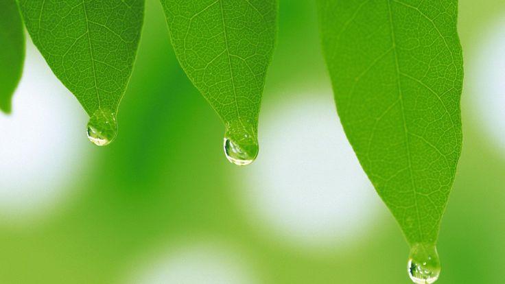 Basur bitkisel ilaç | Basur çaresi ve çözümü