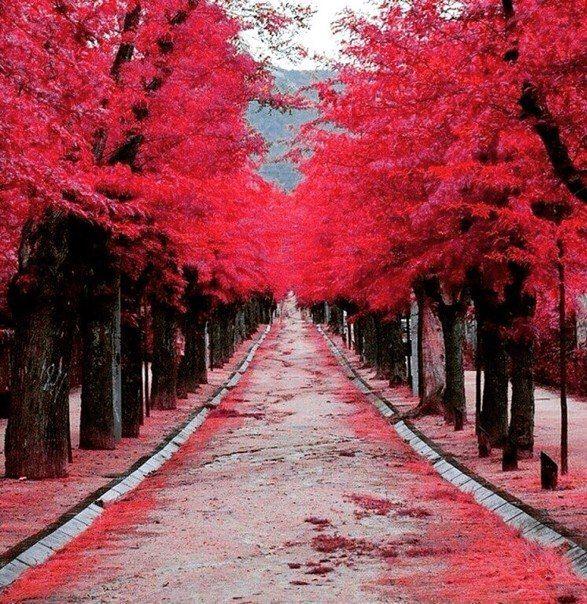 Осень прекрасна своими красками! Аллея влюбленных Испания! #prostovisa #visainspain #spain #autumn #простовиза #визависпанию #испанскаявиза #Испания #осень