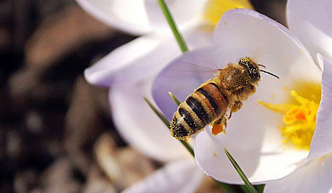 Bier, brandmænd og brændenælder - sommeren byder desværre også på et par ubehagelige  gæster. Læs her, hvad du skal gøre, hvis…