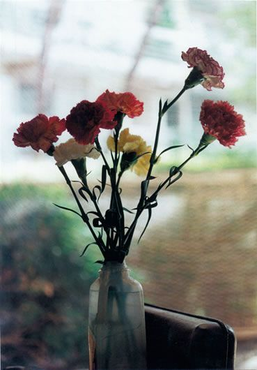 Wolfgang Tillmans, Carnations, 2001. Color photograph  http://www.artnet.com/artists/wolfgang-tillmans/carnations-UBNC8iQi9t35kmMBHTHskw2
