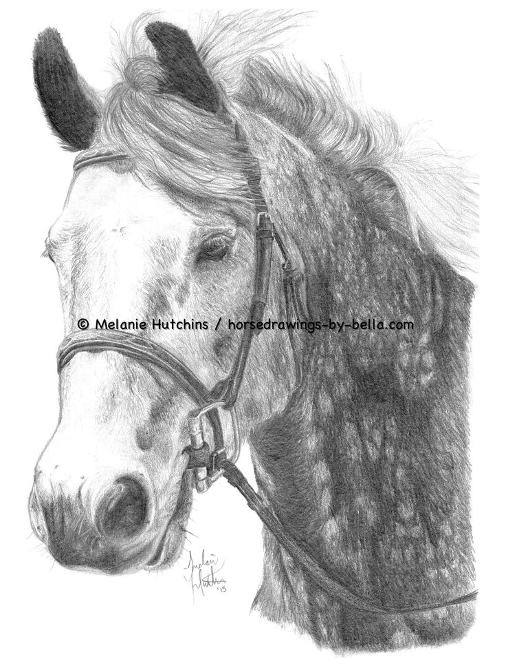 Portrait of Beaker.  Copyright Melanie Hutchins / horsedrawings-by-bella  Follow me on Facebook: https://www.facebook.com/Horsedrawingsbybella.MelanieHutchins Twitter: https://twitter.com/MelHTheArtist YouTube: https://www.youtube.com/channel/UCZDEjNKuowAo92BhnMWWBzA