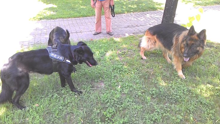 24/06/2015 - Torino con Peja e Osho