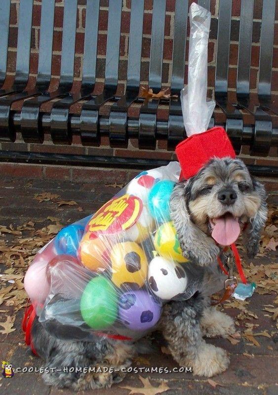 Homemade female dog costumes - photo#37