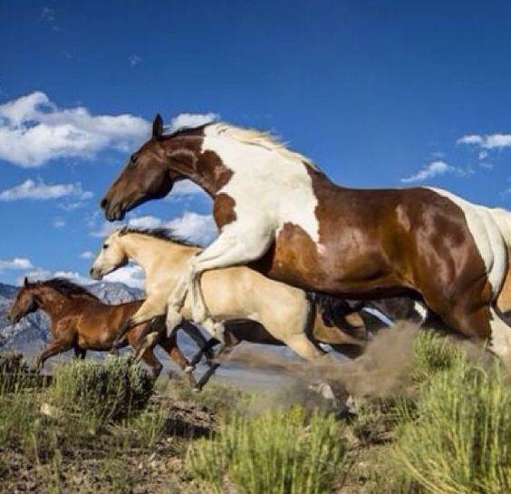 Die Besten 25 Mustang Pferde Ideen Auf Pinterest Wilder