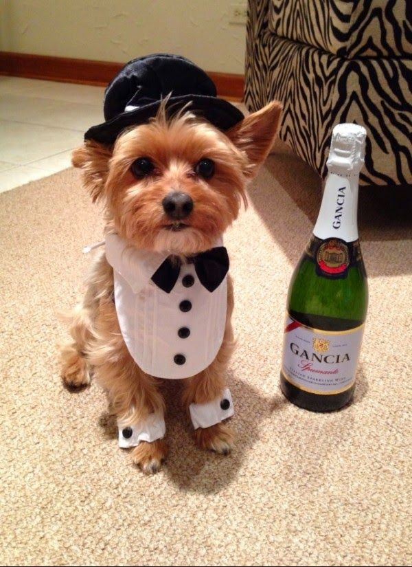 Image result for yorkie new year hut