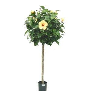 Les 25 meilleures id es de la cat gorie arbre d 39 hibiscus for Engrais hibiscus exterieur