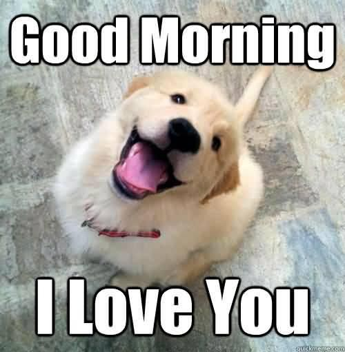 Good Morning I Love You Love Meme Love You Meme Good Morning Animals I Love You Puppy