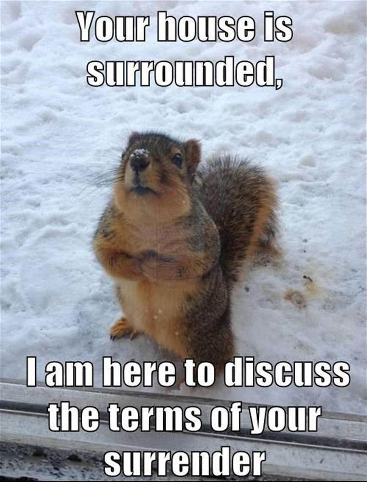 Lol! - www.99centrazor.com | Cute Squirrel