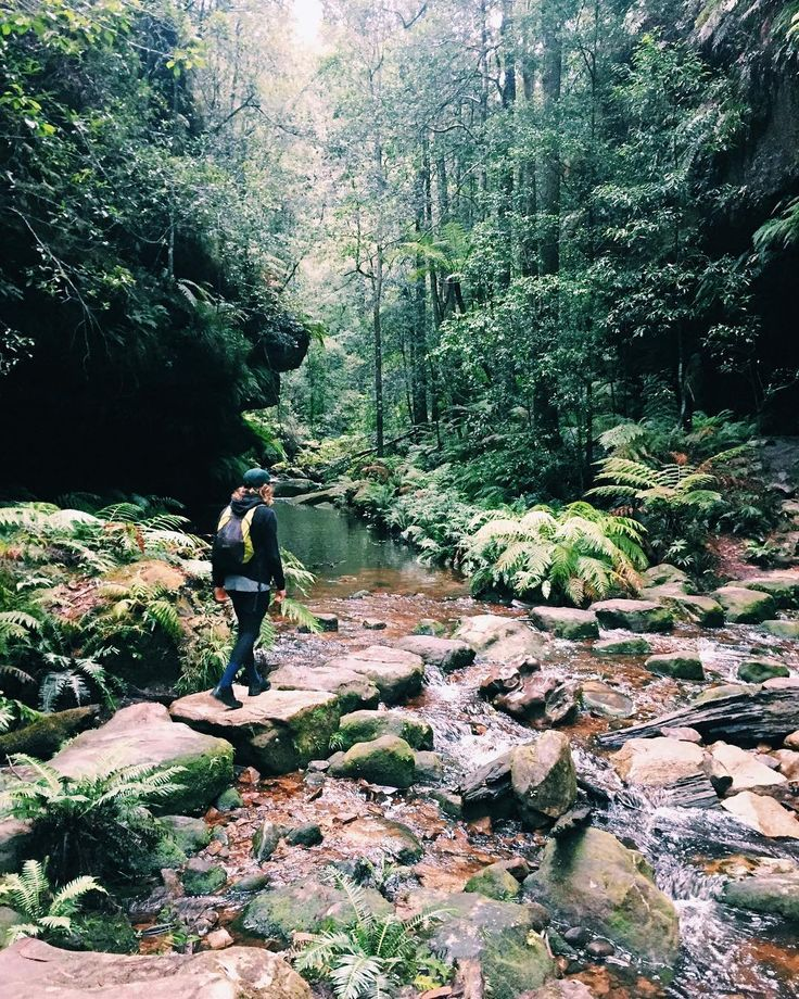 Pure bliss  plus wet feet and a few aching muscles but when the scenery is this good who would care! Today we explored the Blue Mountains from Blackheath hiking along the Grand Canyon Trail it was no easy feat with the pathways turned to streams and puddles but the reward was well worth it. Rainforest waterfalls trickling streams cliff faces it was so beautiful not to mention a fun adventure. You can see more in my story. Now for some well earned cheese and vino  . #bluemountains…