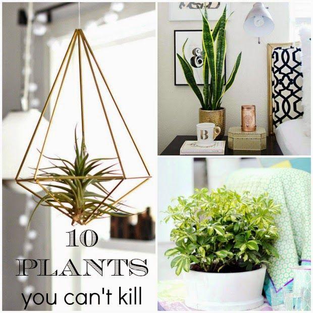 ten plants you cant kill