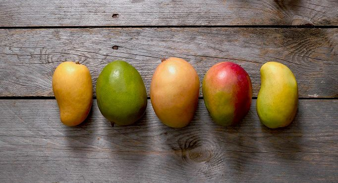 Mango Varieties - Learn About Different Types of Mangoes Varieties | Mango.org