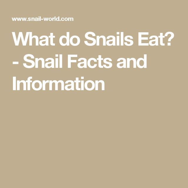 What do Snails Eat? - Snail Facts and Information
