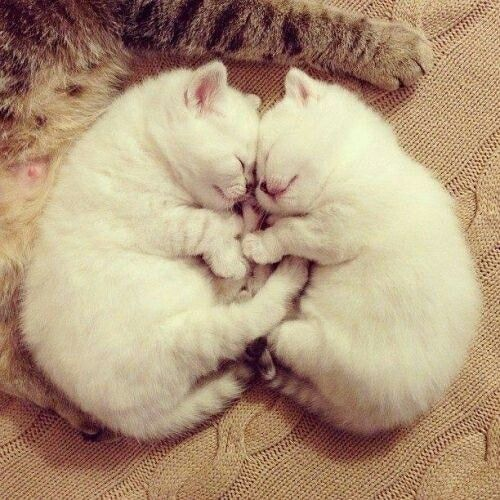 cute cats. for more cats images http://artonsun.blogspot.com/2015/03/cute-cats-for-more-cats-images.html