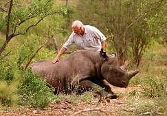 VIDEO: Jak se v Africe stěhovali nosorožci - National Geographic