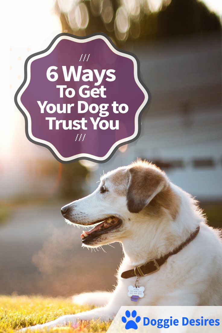 Ways to get your dog to trust you >> http://doggiedesires.com/ways-to-get-your-dog-to-trust-you/