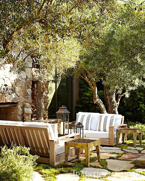 176 Best Images About Olive Trees On Pinterest Olives