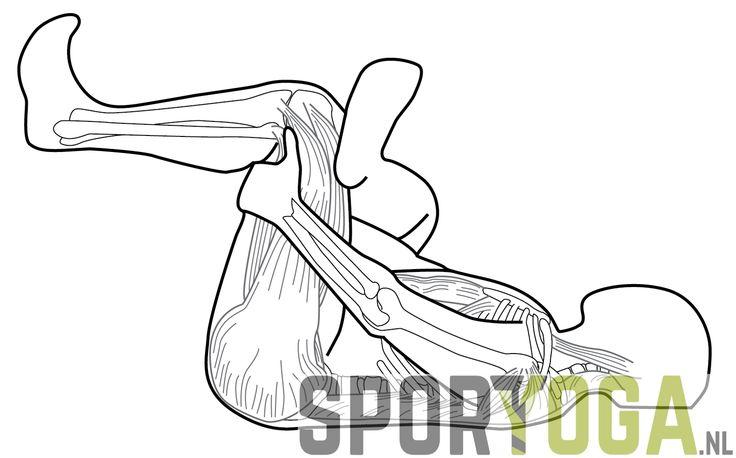Leg stretch anatomy yoga from sportyoga.nl