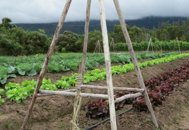 Newstead Wines Vegetable & salad gardens #plett Winelands