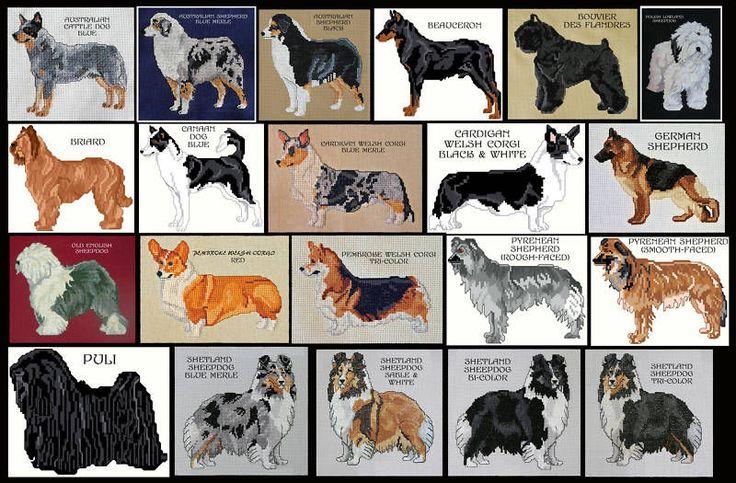 Herding breeds