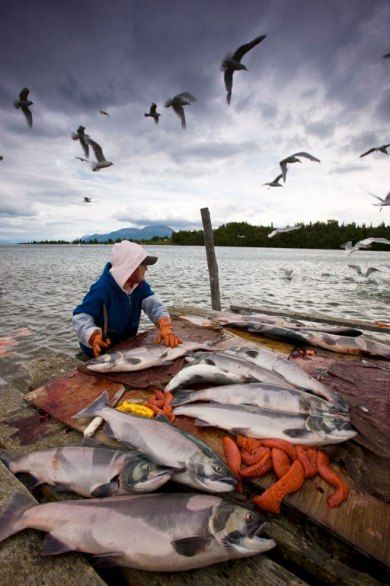 75 best images about fishing in alaska on pinterest for Fishing jobs in alaska