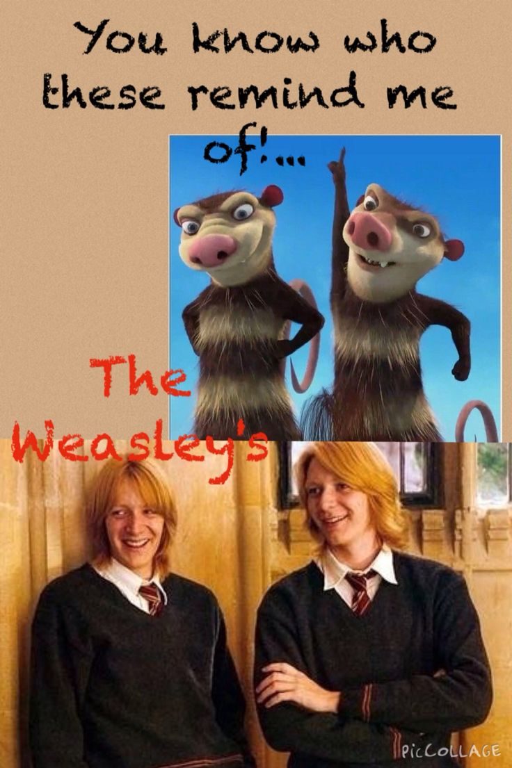 Ice age; Crash & Eddie vs Harry Potter; The Weasley Twins