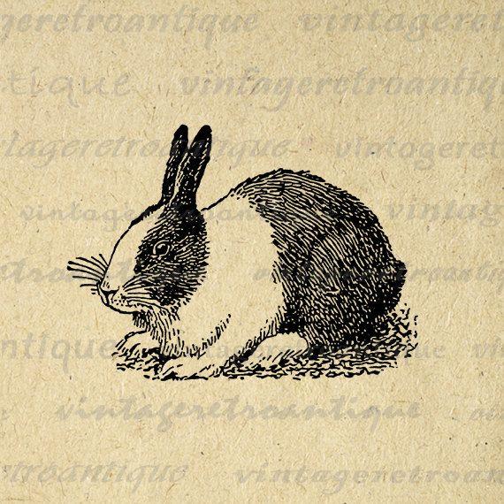 how to draw a dutch rabbit