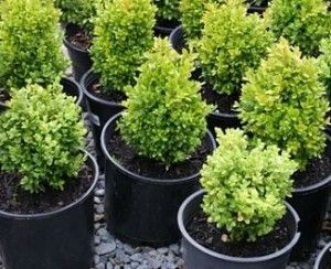 backyard plant nursery herbs | Five Questions You Must Ask Before Starting a Backyard Plant Nursery