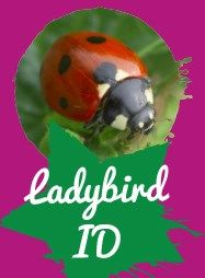 Go on a ladybird hunt and use our handy ID sheet to identify your discoveries.