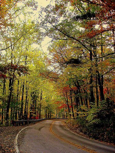 592 Best South Carolina Images On Pinterest