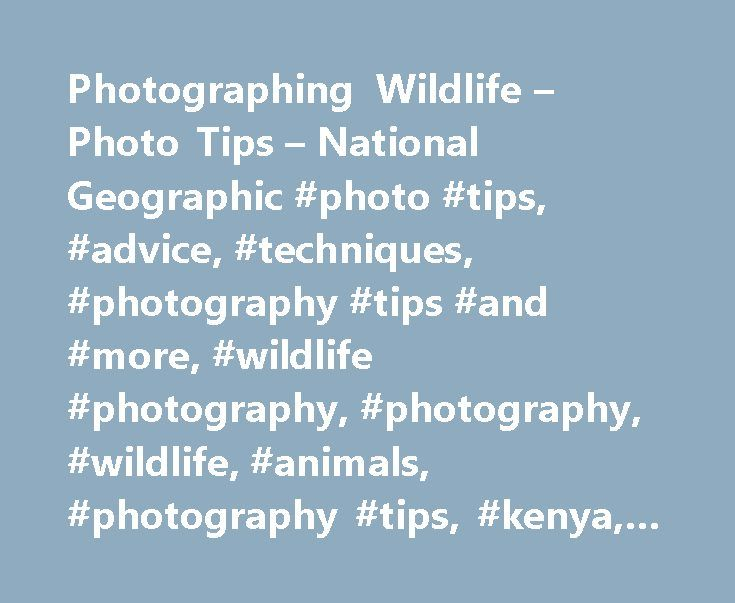 Photographing Wildlife – Photo Tips – National Geographic #photo #tips, #advice, #techniques, #photography #tips #and #more, #wildlife #photography, #photography, #wildlife, #animals, #photography #tips, #kenya, #national #geographic #society http://ghana.remmont.com/photographing-wildlife-photo-tips-national-geographic-photo-tips-advice-techniques-photography-tips-and-more-wildlife-photography-photography-wildlife-animals-photography-ti/  # Shooting Wildlife (With a Camera) Cary Wolinsky…