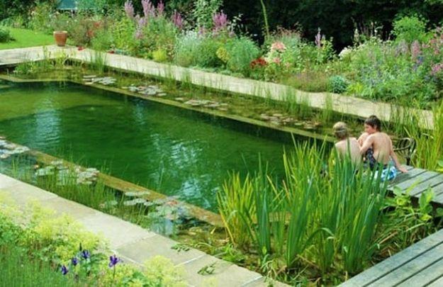 <b>Las piscinas naturales utilizan plantas para filtrar el agua en lugar de químicos, y éstas no solamente hacen el trabajo sino que se ven preciosas.</b>