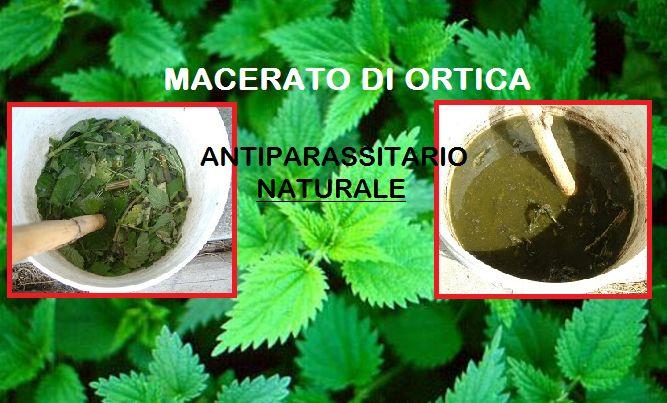 Il Macerato di Ortica come efficace antiparassitario. Semplice e Naturale! Scopri di più http://jedasupport.altervista.org/blog/sanita/salute-sanita/rimedi-naturali/macerato-di-ortica-efficace-antiparassitario/